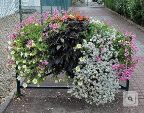 zieleń bariery miejskie